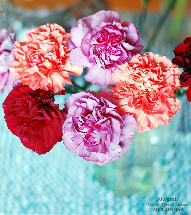 Blommor (7)aW
