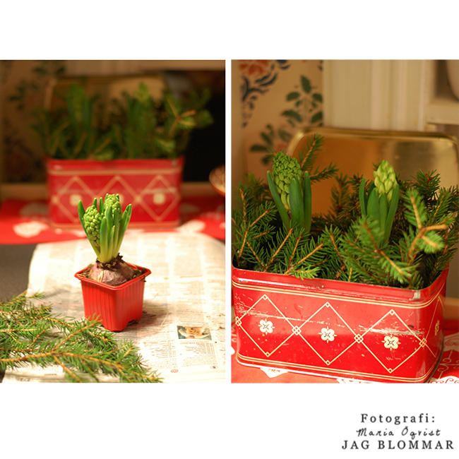 Jul_hyacint (3)W