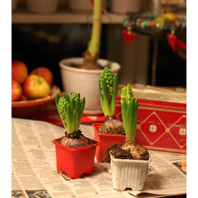 Jul_hyacint (5)aW